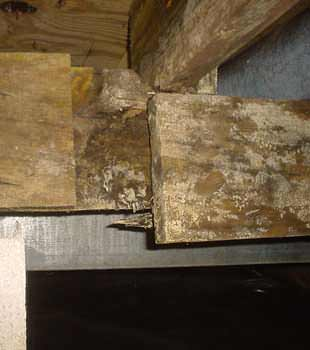 Extensive basement rot found in Mississauga by Clarke Basement Systems