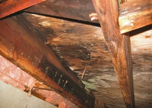 Extensive crawl space rot damage growing in Lakefield