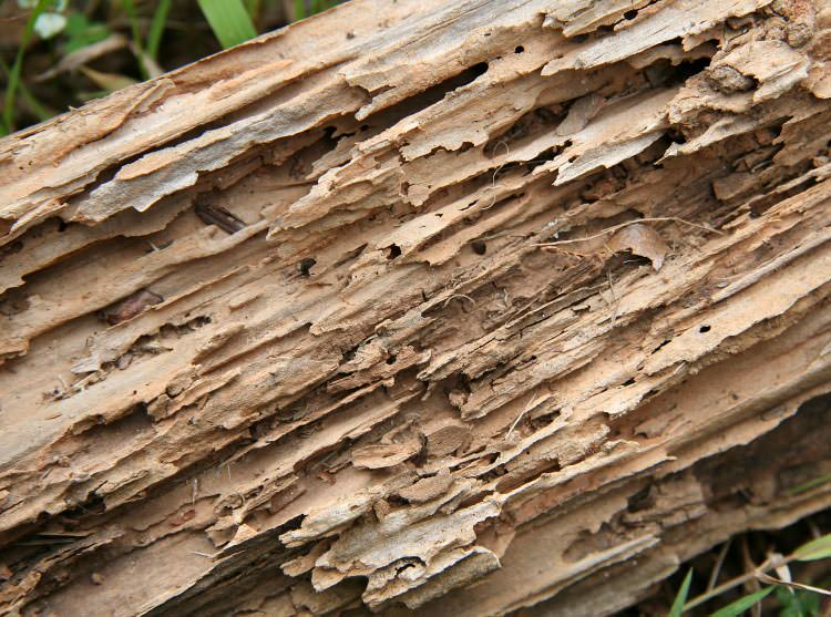 termite damage in crawl spaces in vaughan markham mississauga ontario