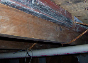 Rotting, decaying wood from mold damage in Lindsay